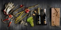 Casali Vini sito internet e branding